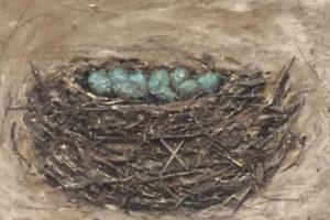 Bird_Nest_Flying_From_Nest