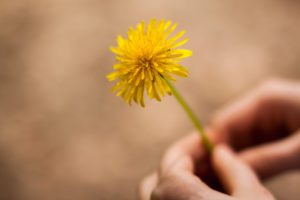 Dandelion - Finding Joy in the Simple, Everyday Things