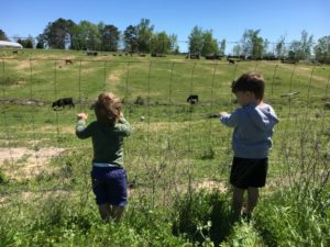 Strawberry Picking for the Win - boys watching cows