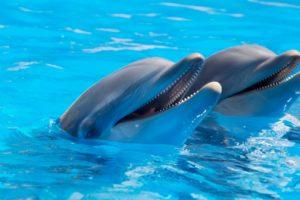dolphin_aquarium