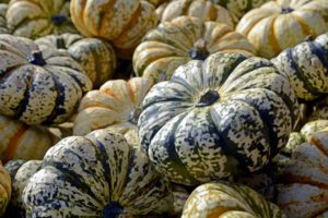 orange black pumpkins