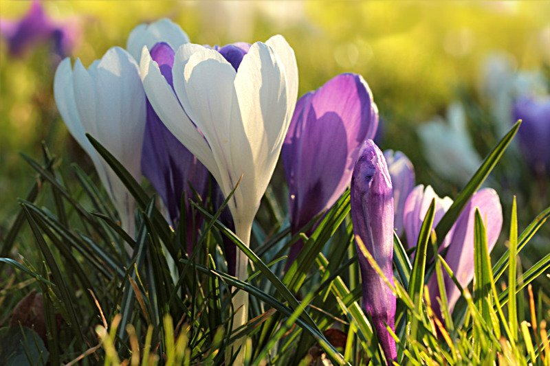 Green cleaning tips - Happy Spring!