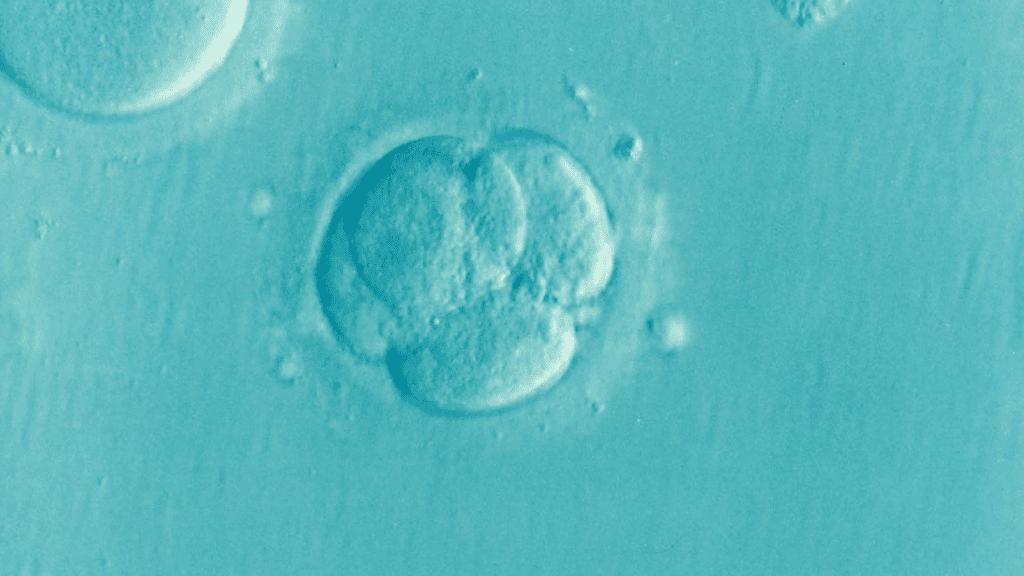 My infertility journey - IVF resulted in many fertilized eggs
