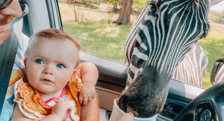 Exploring Alabama :: A Day Trip to the Alabama Safari Park