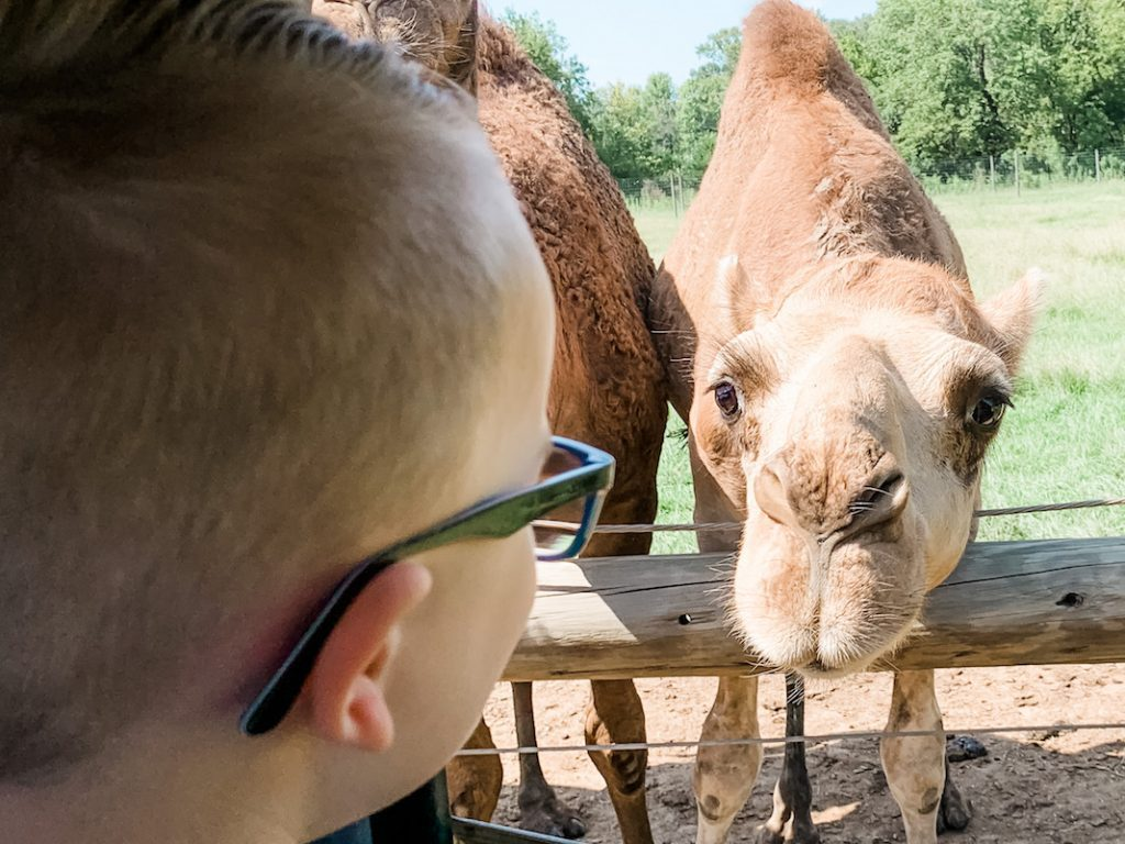 A day trip to the Alabama Safari Park